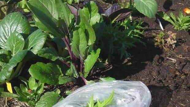 Gardencrops1
