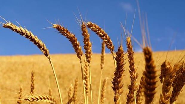wheat_ccfler_Venex_jpb