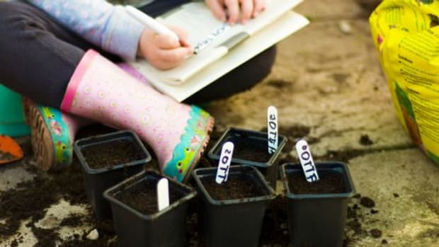 seed-labels-ccflcr-Aneta.Morze_