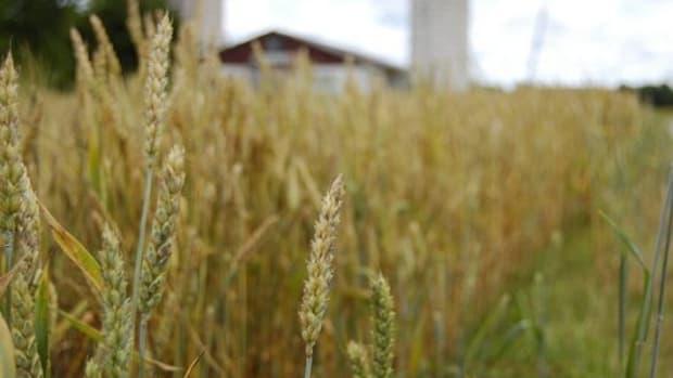 wheatfarm-ccflcr-teresajohnson1965
