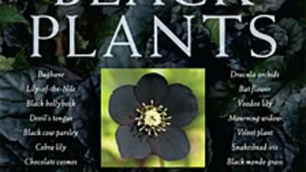 blackplants1