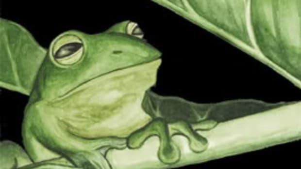 frogslegs1