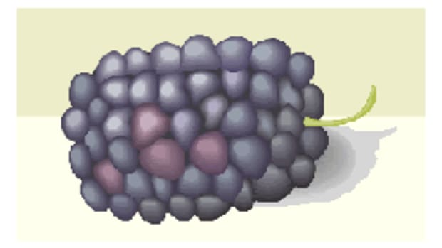 blackberrycloseup1