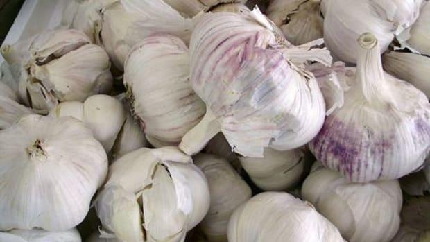 garlic-ccflcr-mullica