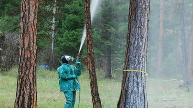spraying-ccflcr-ForestServiceNorthernRegion