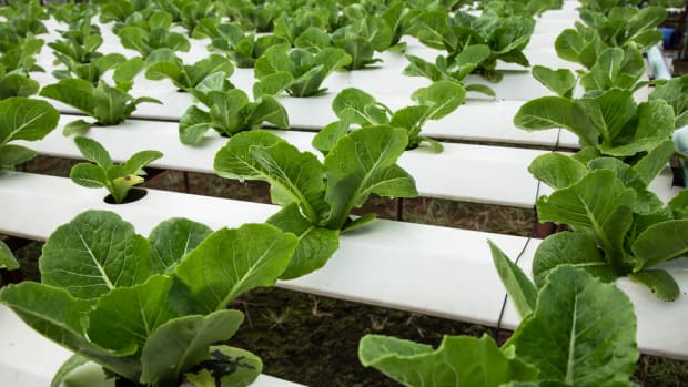 Is Hydroponic Food Organic? Organic Farmers Urge USDA to Say No