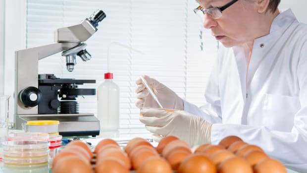 Which Came First, the Lab or the Lab-Grown Egg White?