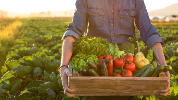 New Research Adds to the Evidence that a Plant-Based Diet is Better for the Environment