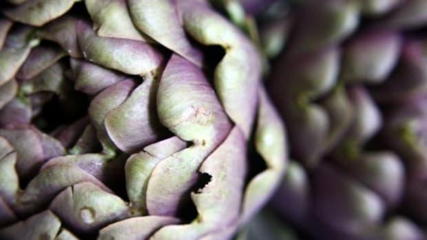 artichoke-ccflcr-marfis75