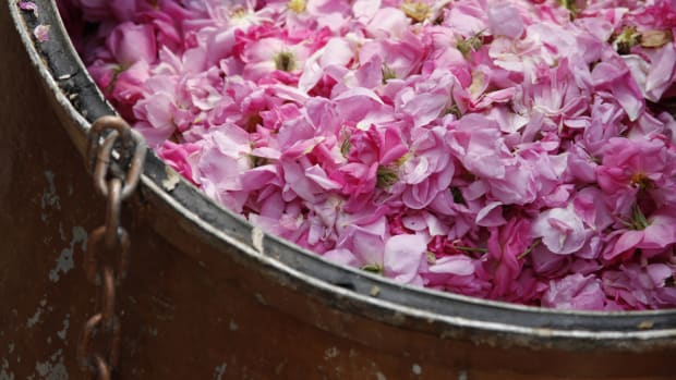 Benefits of Rose Water: A Must Have Summertime Skin Fixer