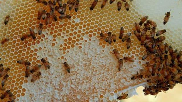 bees-ccflcr-Don-Hankins1