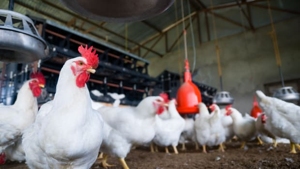 Big Food Accuses Big Chicken of Collusion and Price Fixing