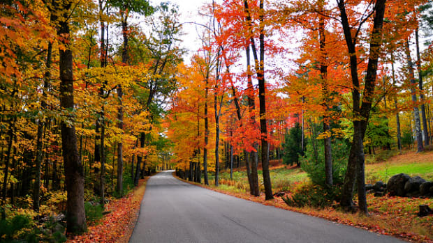 Autumn leaves along a road.