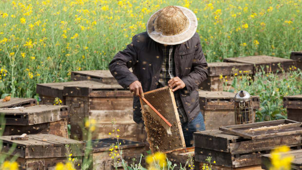 It's Definitely the Pesticides: Study Confirm Honeybee Deaths Linked to Agrochemicals