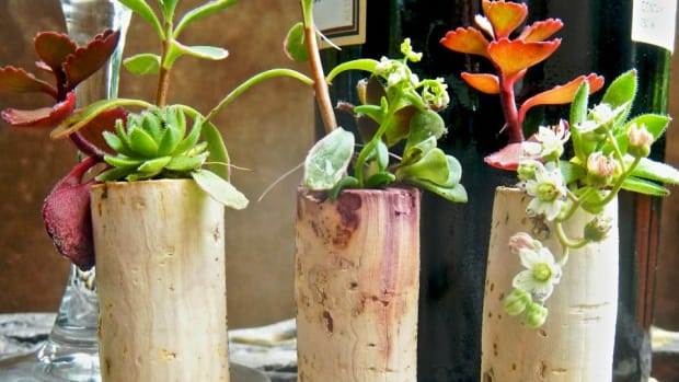 Make a succulent garden using wine corks.