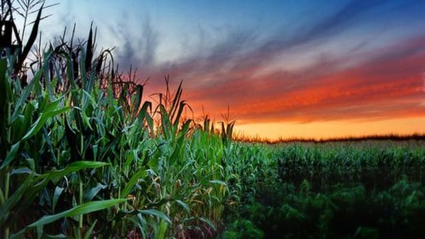 corn_field_ccfler_James_Jordan-
