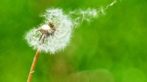 flowerpollen-ccflcr-kaybee07