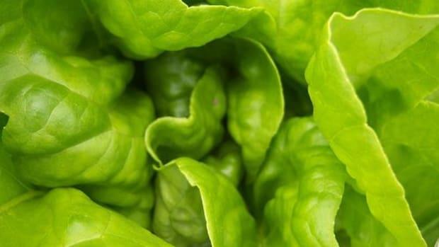 lettuce-ccflcr-lawrence