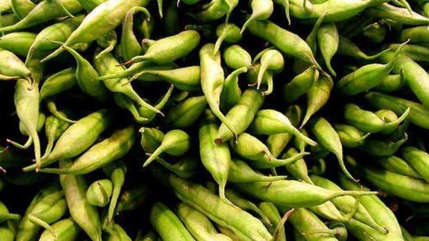 The Best Ways To Cook Fresh Green Beans Plus 4 Recipes Organic