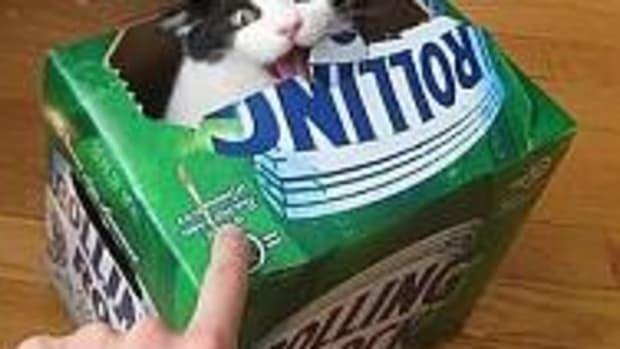 beercat3