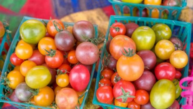 tomatoes-ccflcr-clayirving