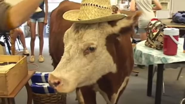 milkshake the cow
