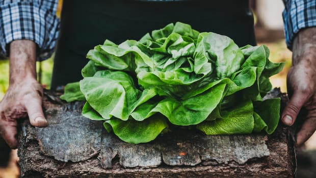 12 Vibrant Salad Greens That'll Change the Way You Salad Forever