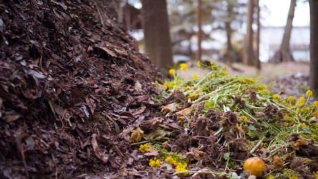 compost-ccflcr-Joi