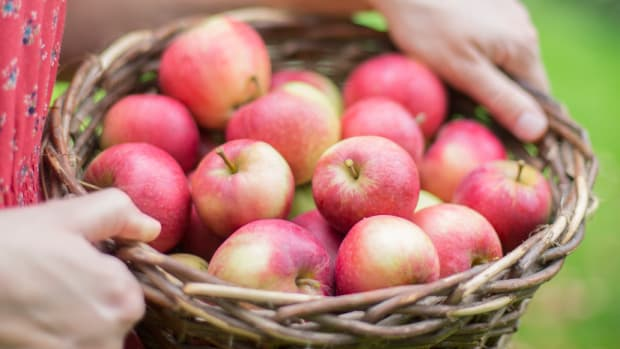 15 Ways to Celebrate (and Eat!) Autumn and Apple Season