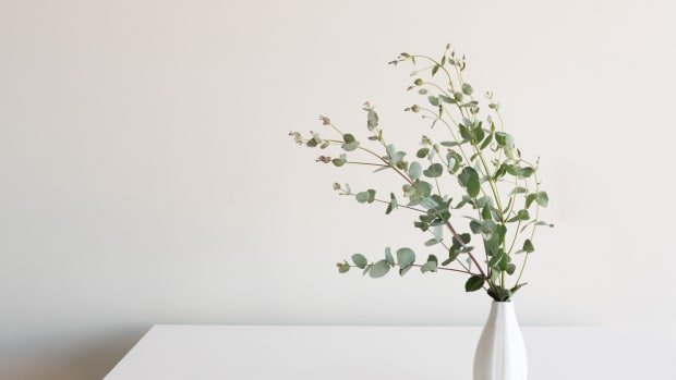 Eucalyptus leaves in small white vase on table against neutral background