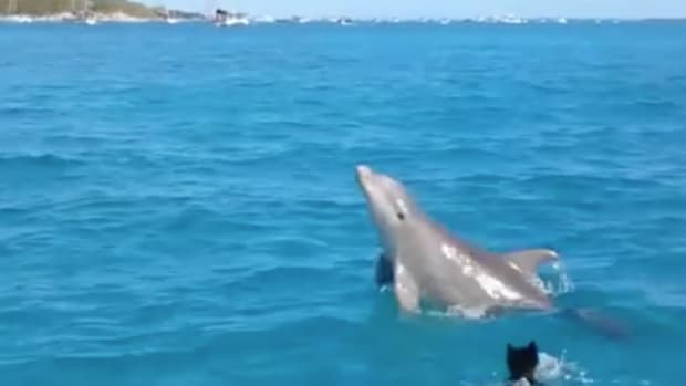 We're All Just Like this Puppy and Dolphin, Right? [Video]