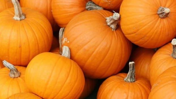 pumpkin-ccflcr-daniellescott