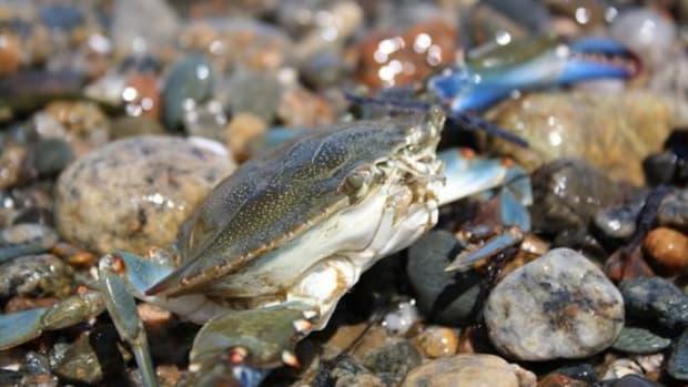 crab-ccflcr-sapienssolutions