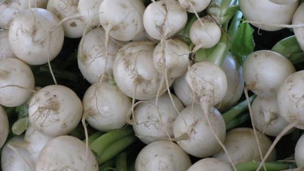 turnip-ccflcr-nolaagent