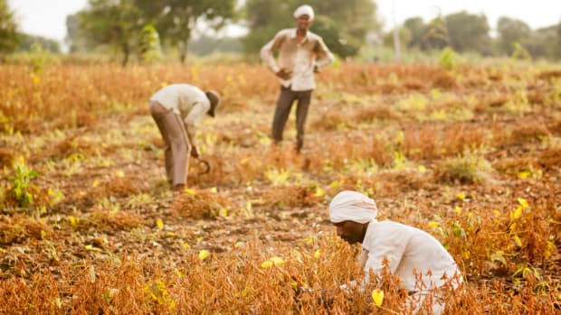 Global Food Supply Faces 'Catastrophic Losses' by 2040