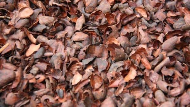 cocoashells-KirstenHudson