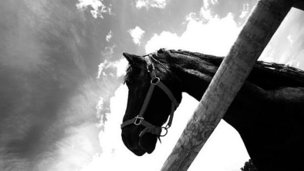 horse-ccflcr-visualpanic