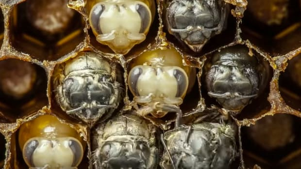Must Watch! A Bee's Life is So Beautiful [Video]