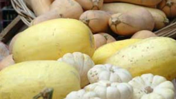 organic-squashes1