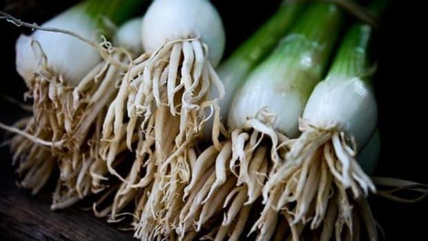 spring-onion-ccflcr-niikesch