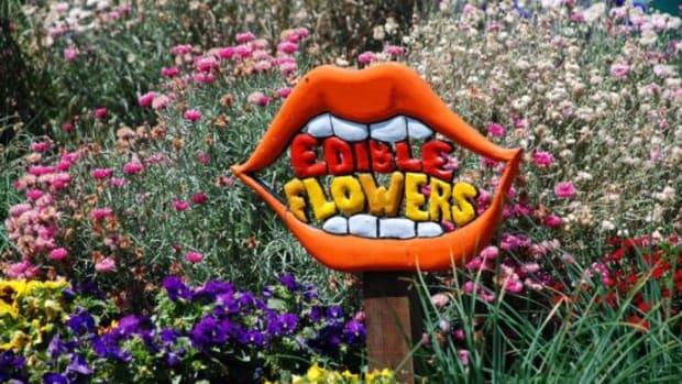 edibleflowers-ccflcr-kthread