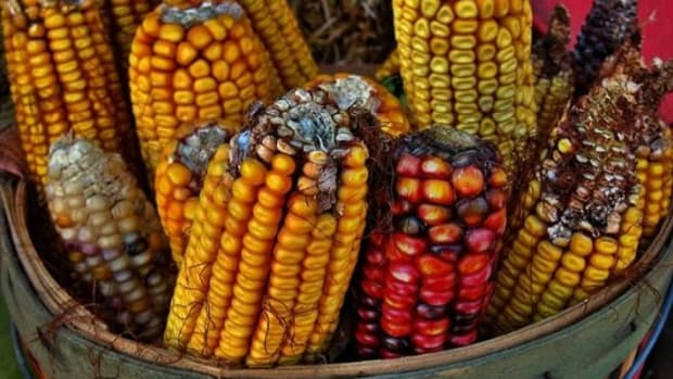 corn-ccflcr-r-z