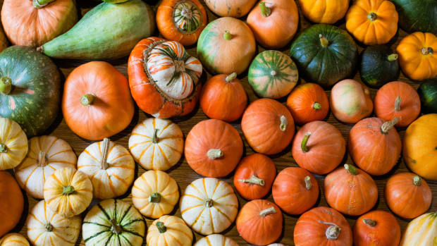 5 Winter Squash Varieties