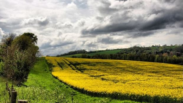 farms-ccflcr-Linda-Cronin
