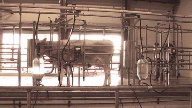 milkingcow-ccflcr-JASON-ANFINSEN1