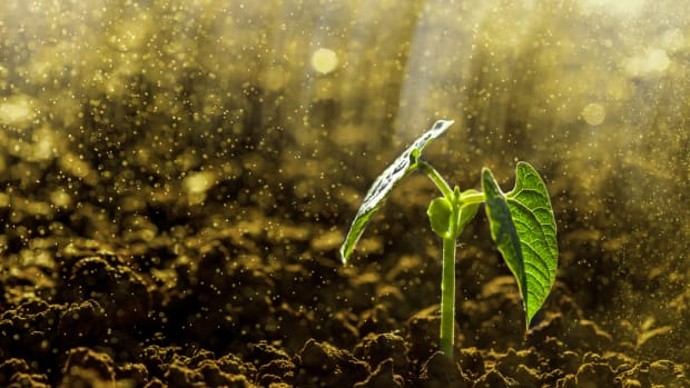 General Mills Invests in Soil Research at the University of Minnesota