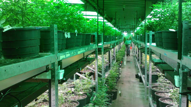 Bob Marley's Son is Turning Prisons into Pot Farms