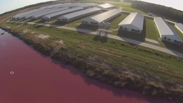 The Drone Footage that Will Make You Swear Off Factory Farm Food Forever [Video]
