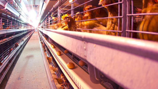 Sodexo Brings Cage-Free Eggs to the International Market With 2025 Deadline