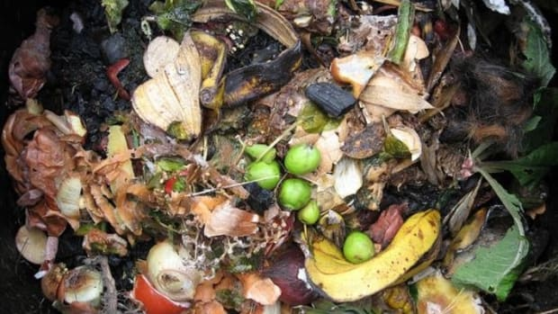 compost-ccflcr-Watt_Dabney